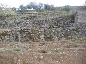 Douro畑2