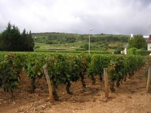 Marsannay-la-Cote