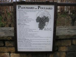 Poulsard